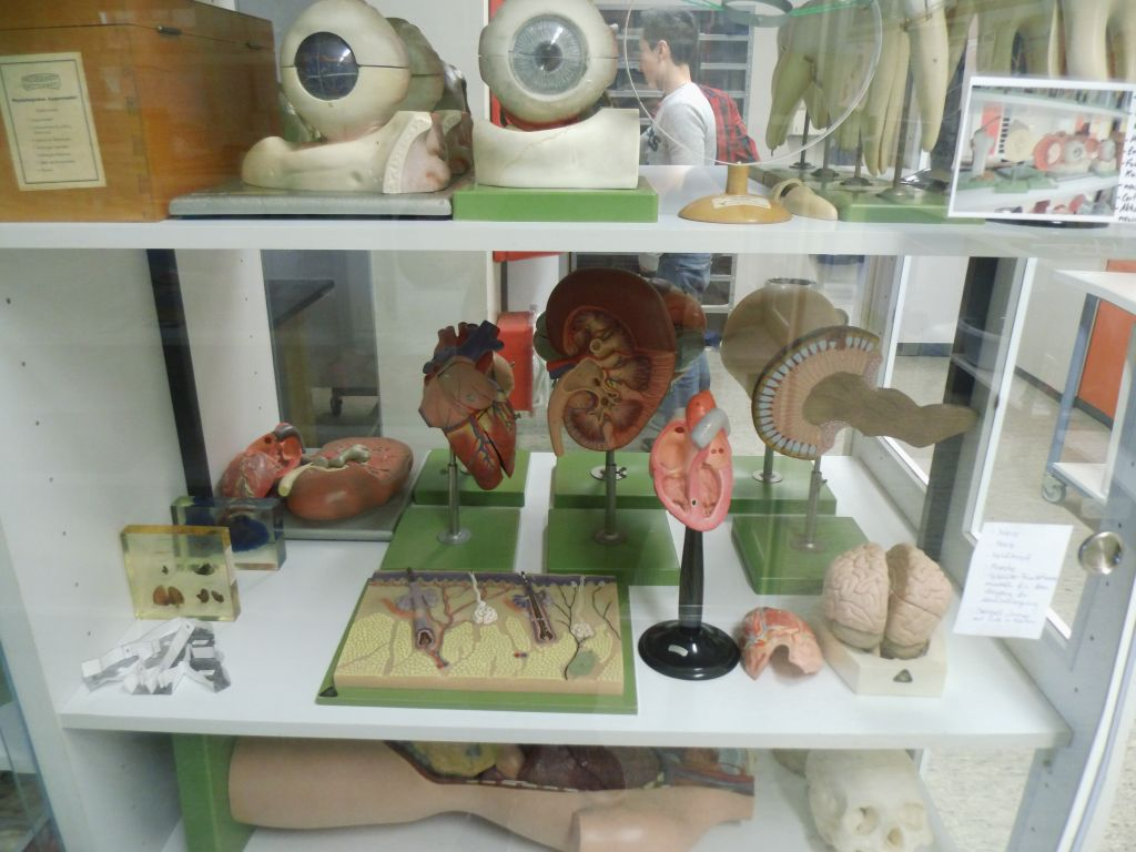 Naturwissenschaftliche Sammlung